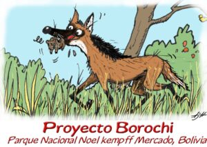 Donated to the Maned Wolf Conservation Project, Bolivia 2005. This cartoon was stuck on the doors of the 1987 Toyota Landcruiser used for fieldwork.